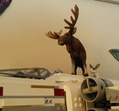 Laser Moose models